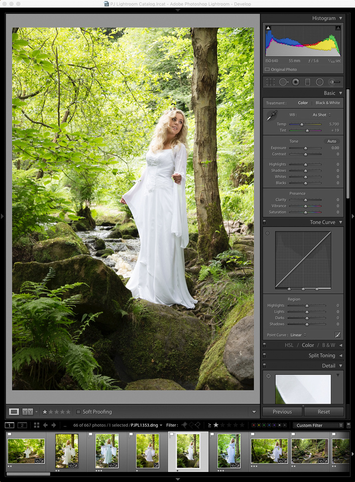 Raw-file-1353 as shown in Lightroom